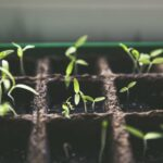 seed starting at home